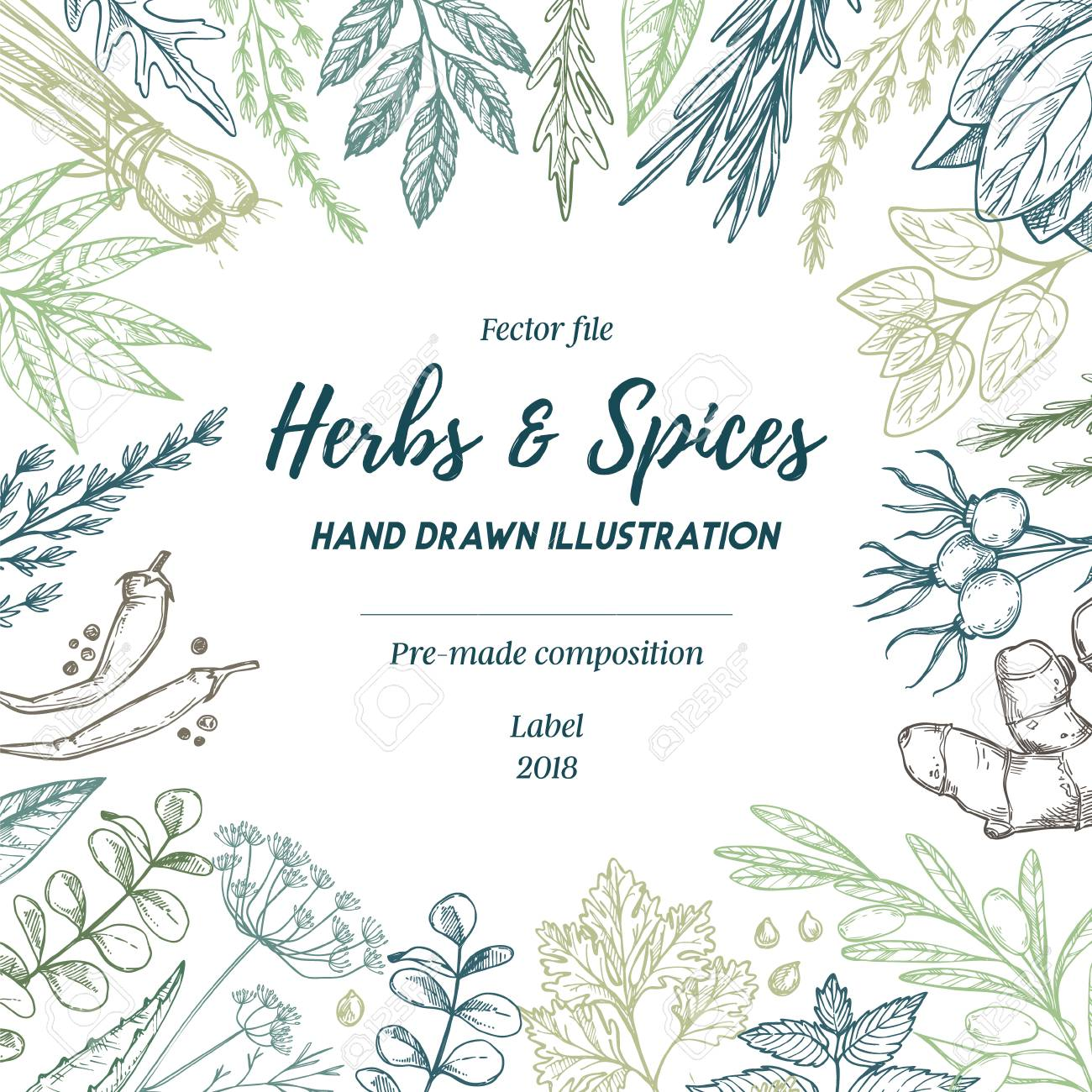 Hand Drew Vector Illustration. Frame With Herbs And Spices (sage ...