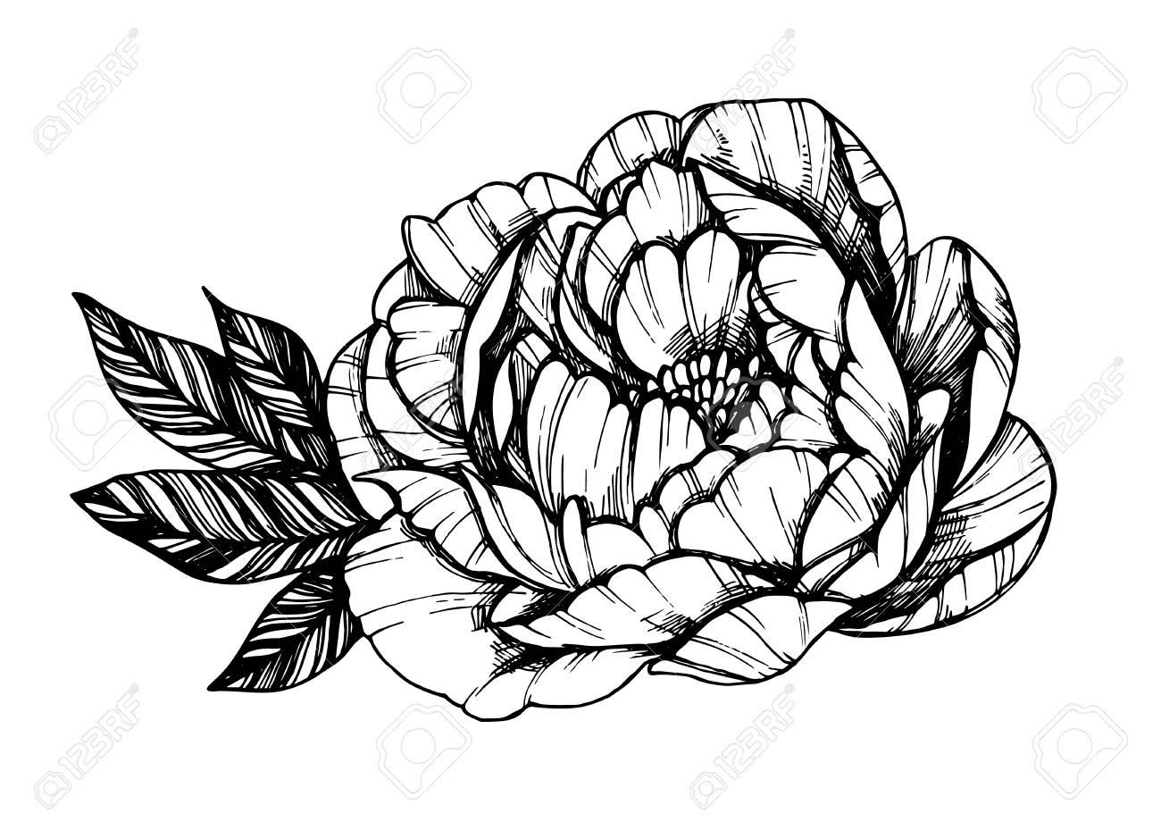 Hand Drawn Vector Illustration Peony Flower Floral Tattoo Royalty Free Cliparts Vectors And Stock Illustration Image 114785742