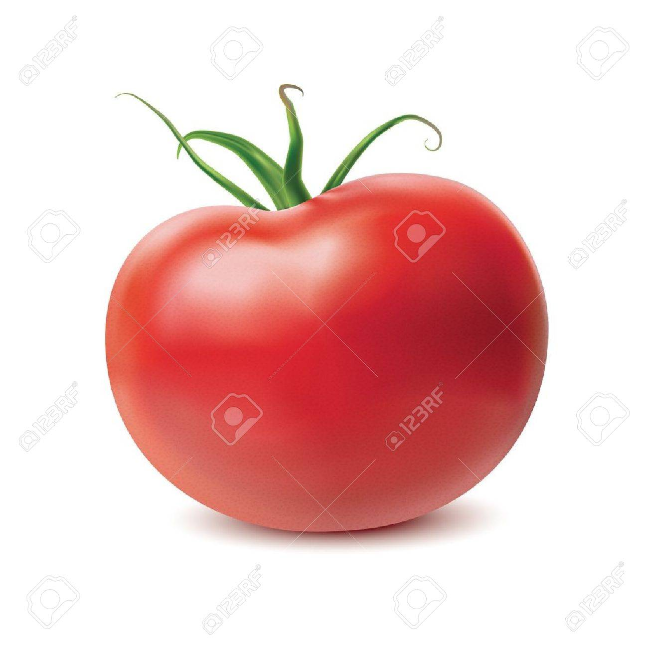 Tomato isolated on white background. Vector - 12083008