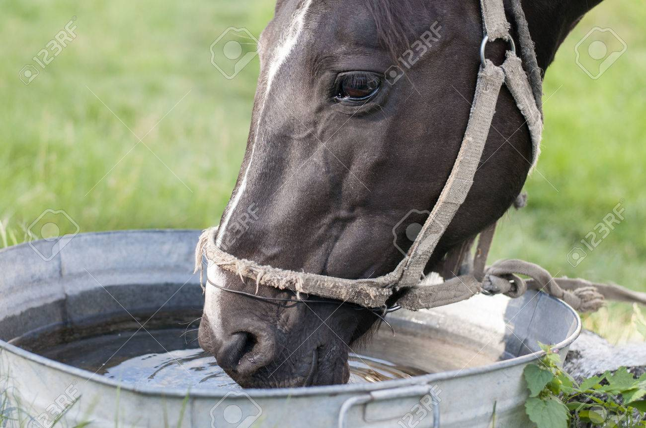 Horse drinking out of a water trough - 42117766