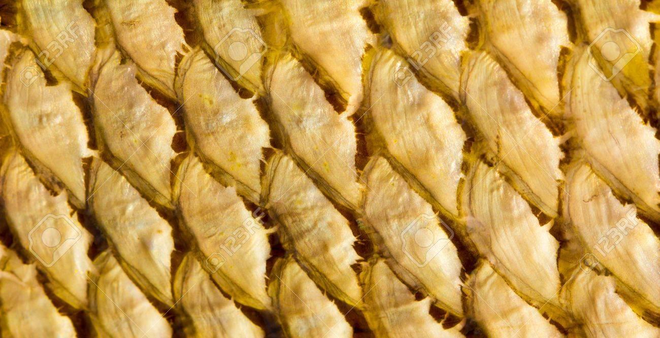 Fish Scales texture Stock Photo - 9291605