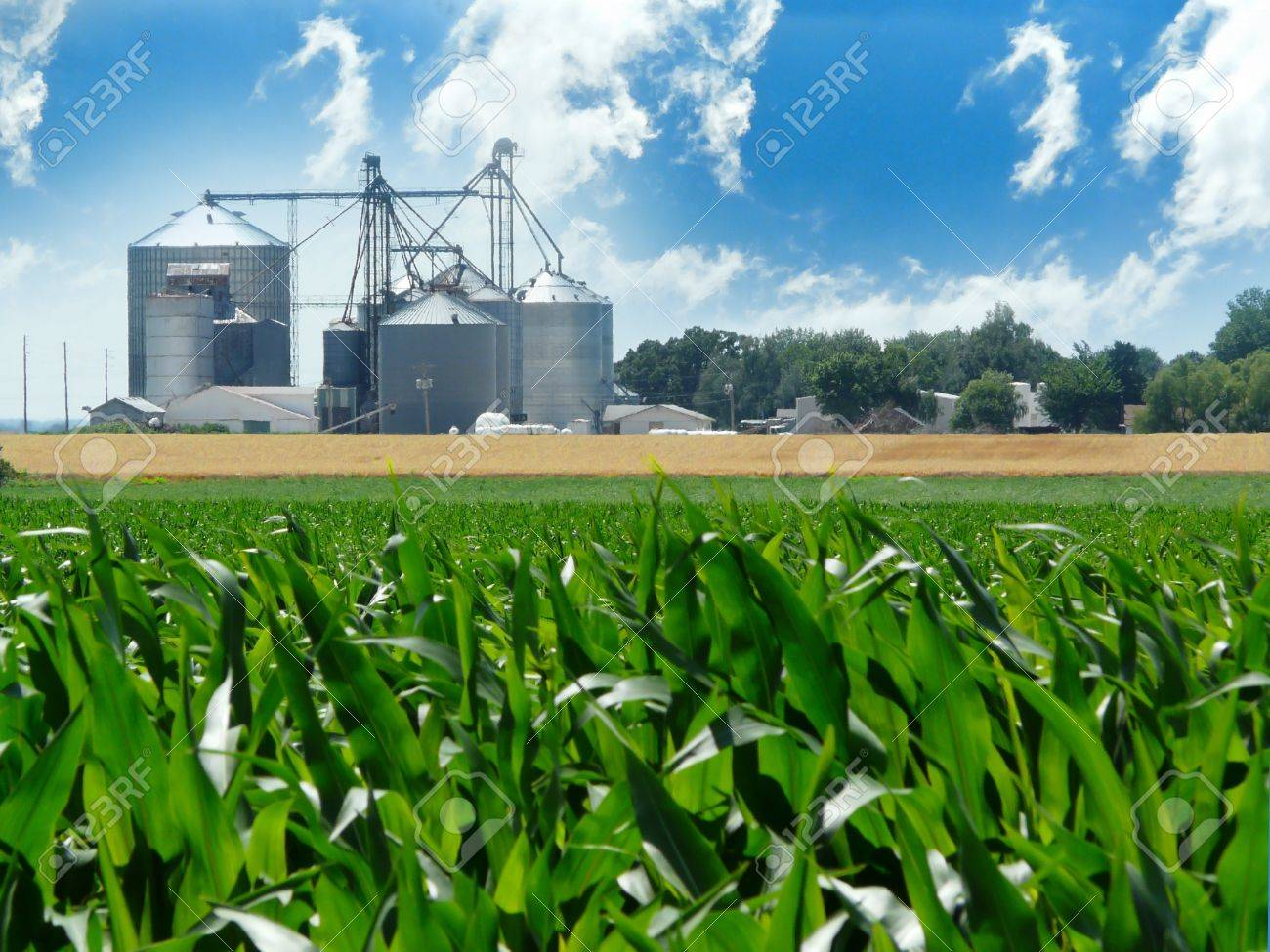 Ethanol images stock pictures royalty free ethanol photos and lush green corn field with grain bins in the distance buycottarizona