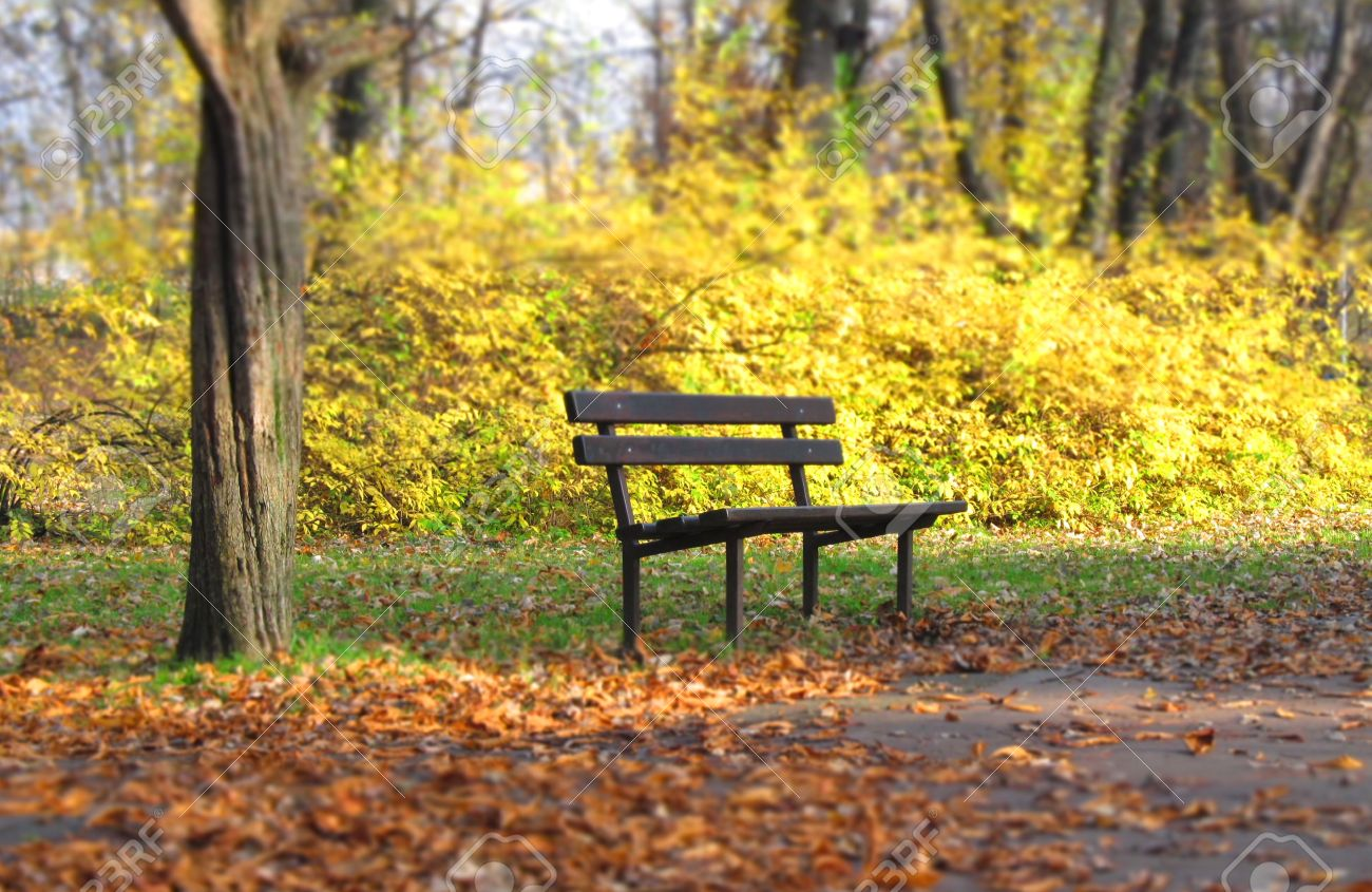 A Bench In The Park With Blurred Background And Foreground Stock ... for Park Background With Bench  303mzq