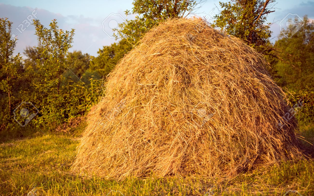 hay pile as an agricultural farm and farming symbol of harvest