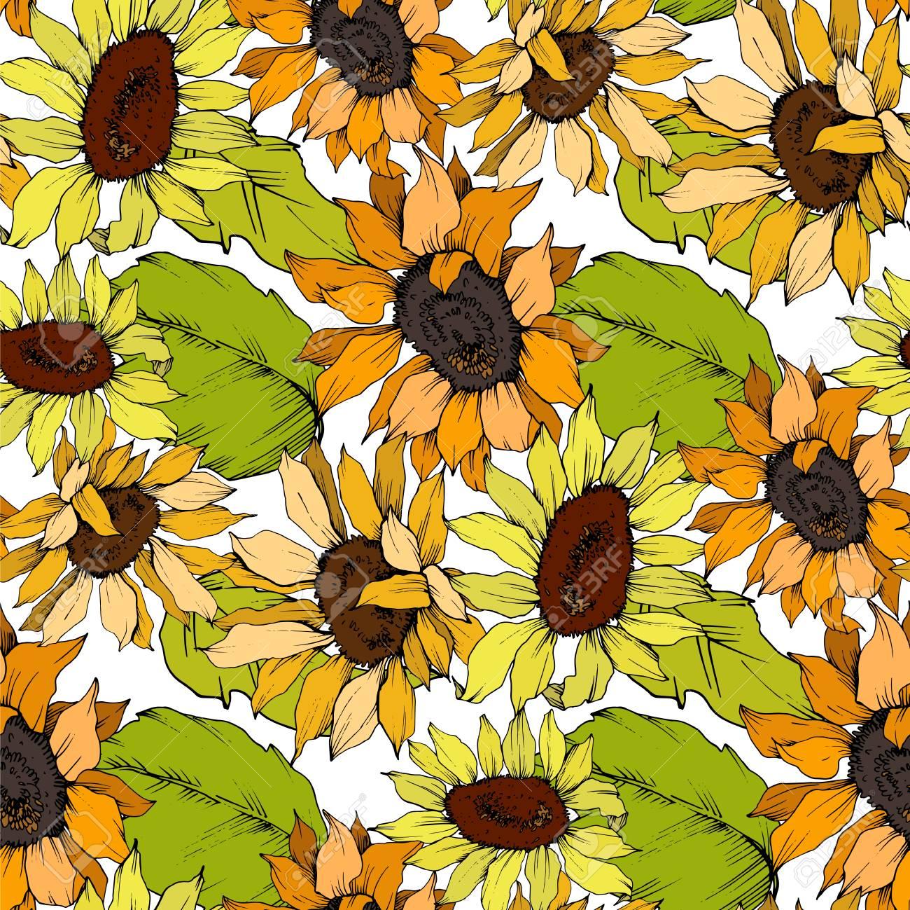 Vector Sunflower Floral Botanical Flower Wild Spring Leaf