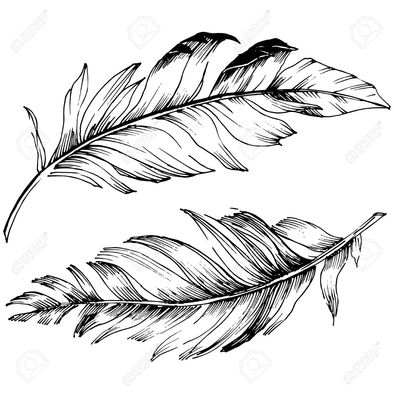 Vector bird feather from wing isolated. Isolated illustration element. Black and white engraved ink art. - 133390287