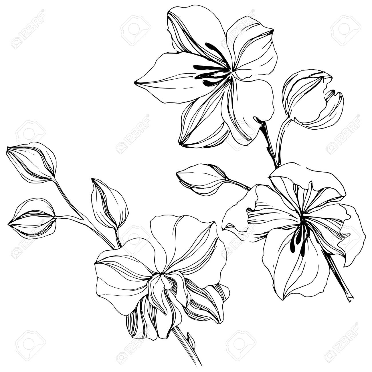 Vector tropical orchid flowers. Floral botanical flower. - 133390312