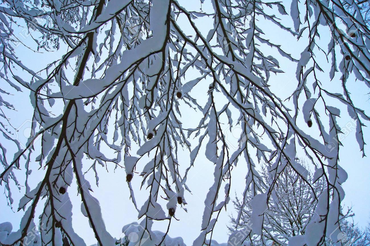 photo, jpg, abstract winter tree Stock Photo - 17278058