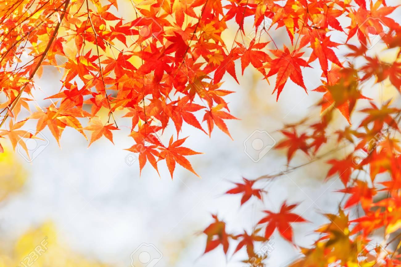 autumnal leaves - 28241579