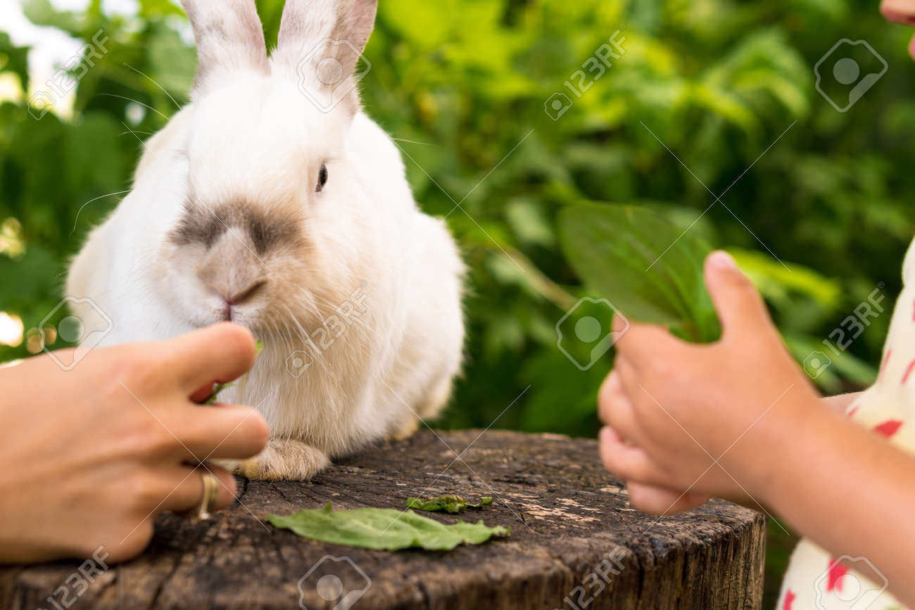 Small children feed a large white rabbit sitting on a tree stump in the garden in summer. Hare in wild meadow gnaws and eats grass in spring or summer. Animal, environmental protection. easter concept - 165197657