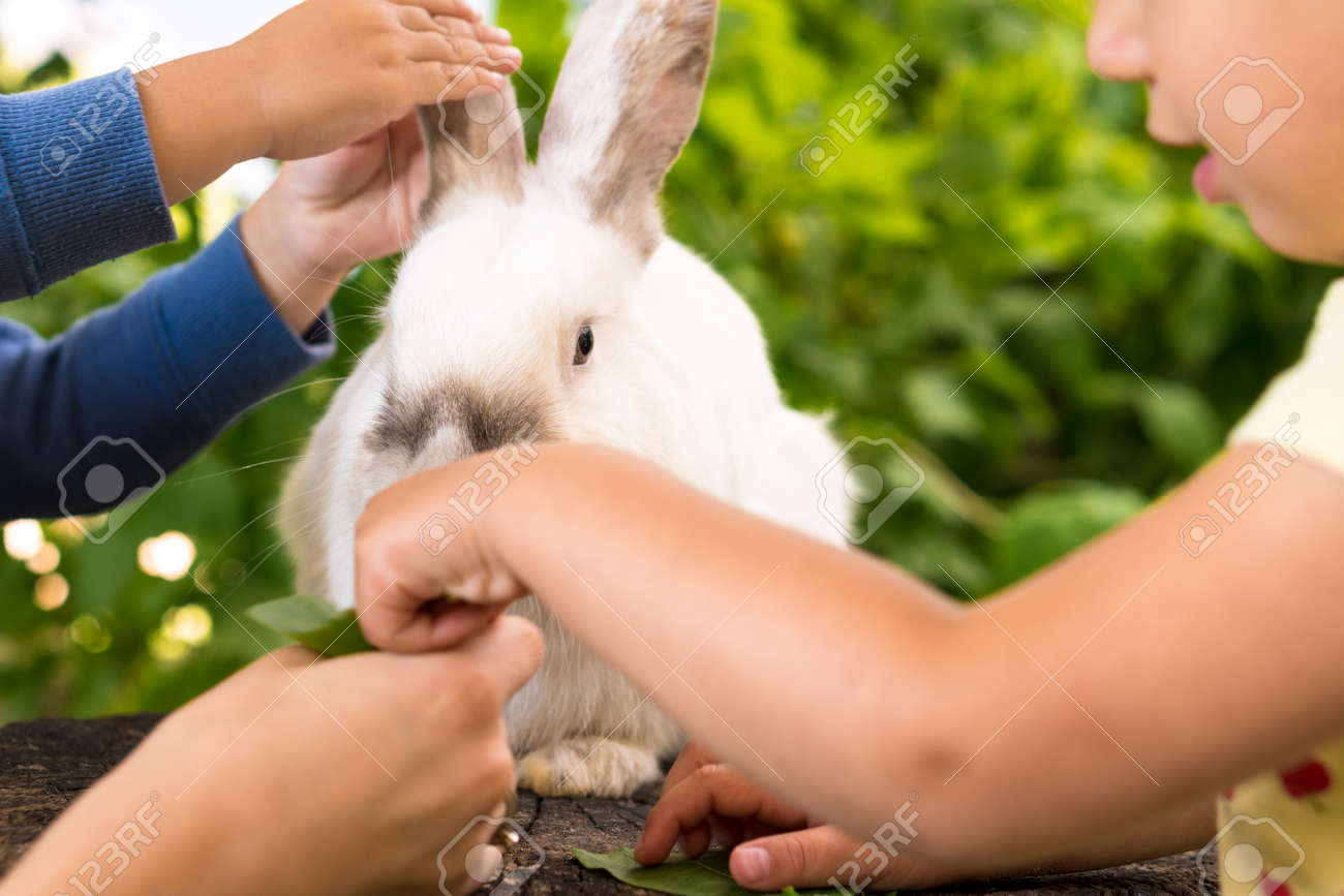 Small children feed a large white rabbit sitting on a tree stump in the garden in summer. Hare in wild meadow gnaws and eats grass in spring or summer. Animal, environmental protection. easter concept - 165210373