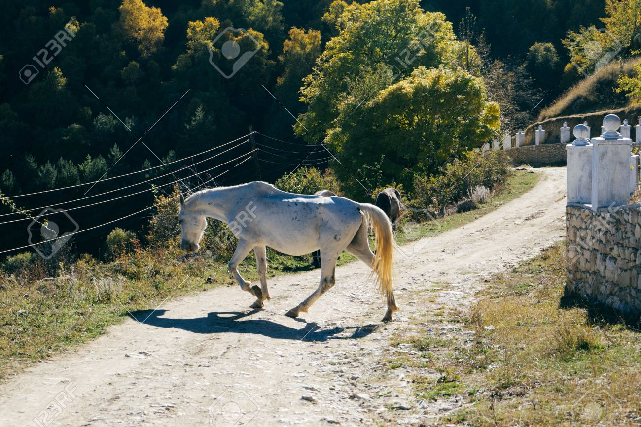 Beautiful White Horse Jumps On A Country Road Stock Photo Picture And Royalty Free Image Image 91037654