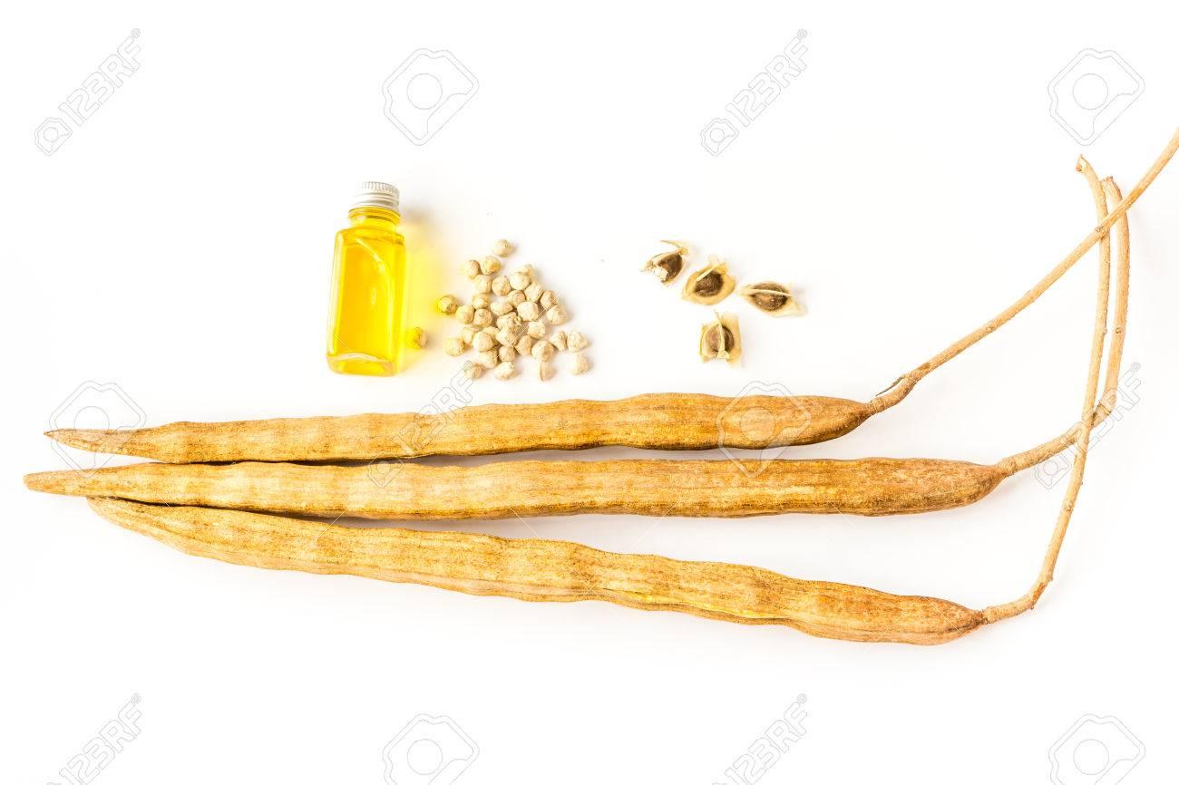 moringa seed oil Stock Photo - 27084239