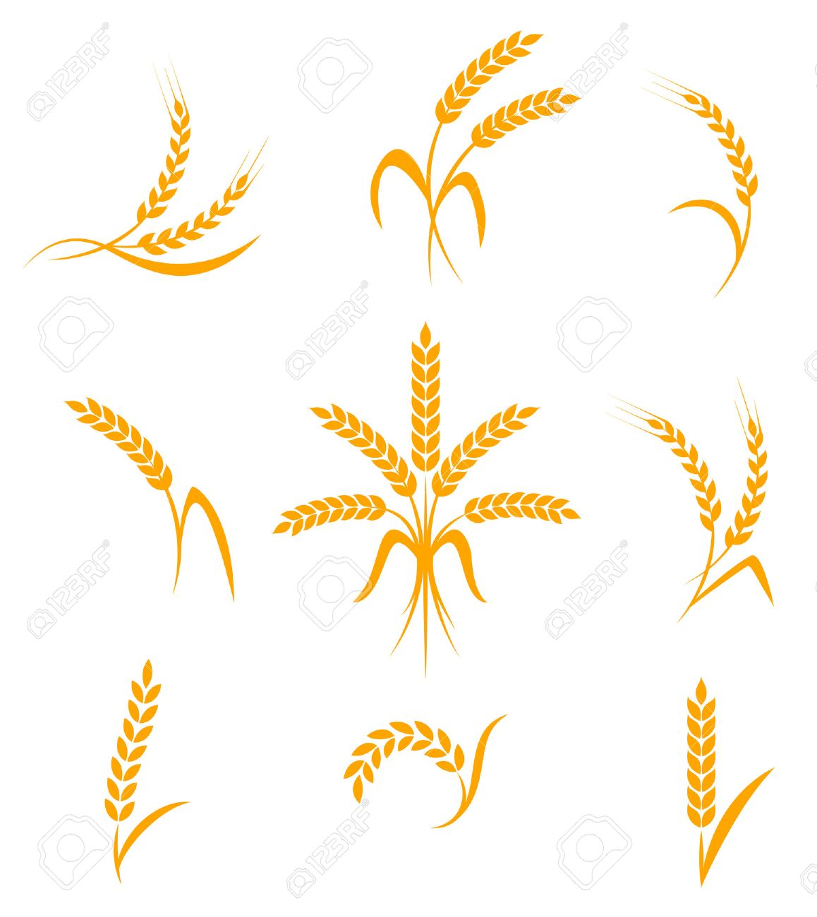 Wheat ears or rice icons set. Agricultural symbols isolated on white background. Design elements for bread packaging or beer label. Vector illustration. - 51336310