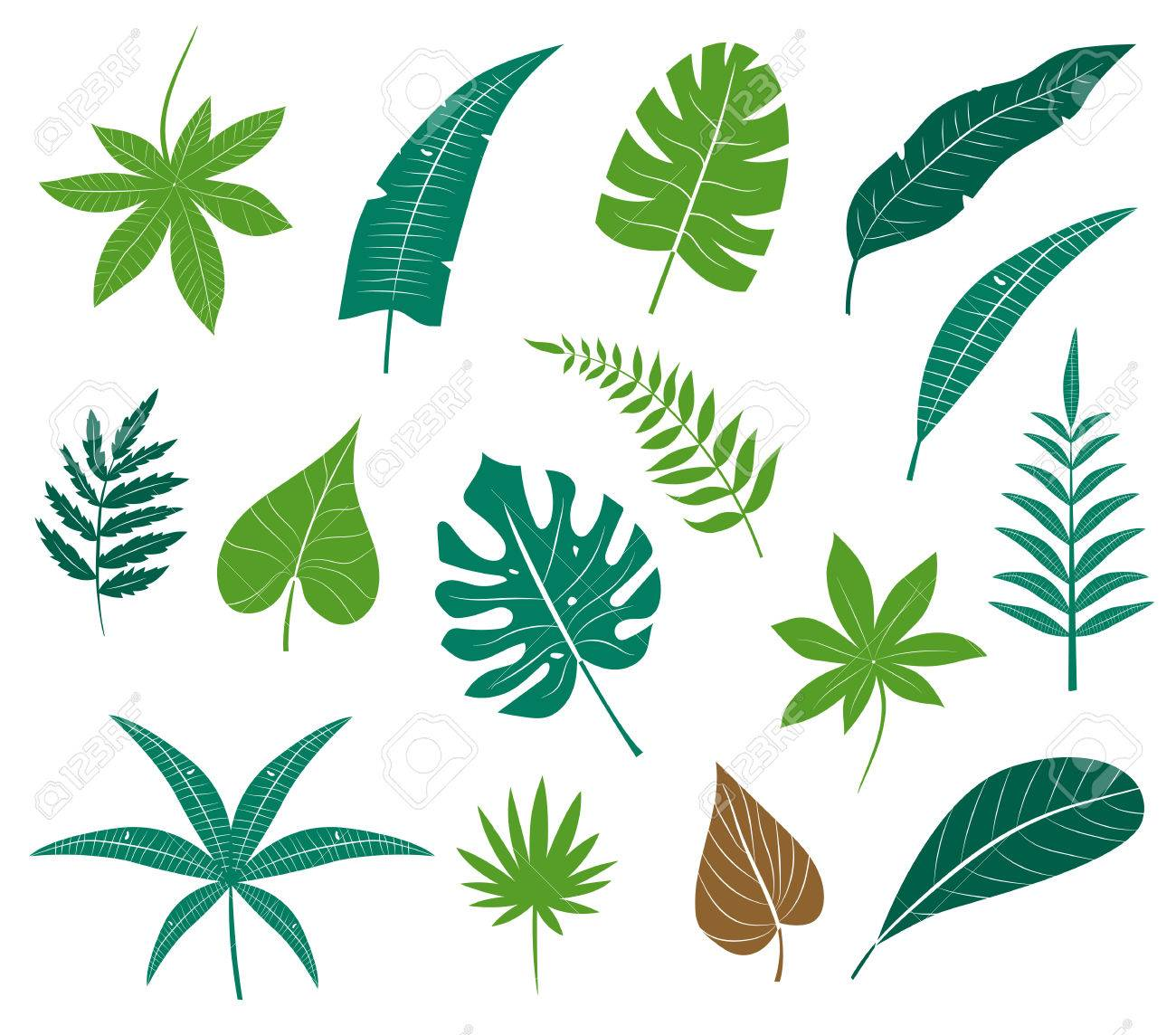 Icon Set Different Plants Palm Leaves Isolated On White