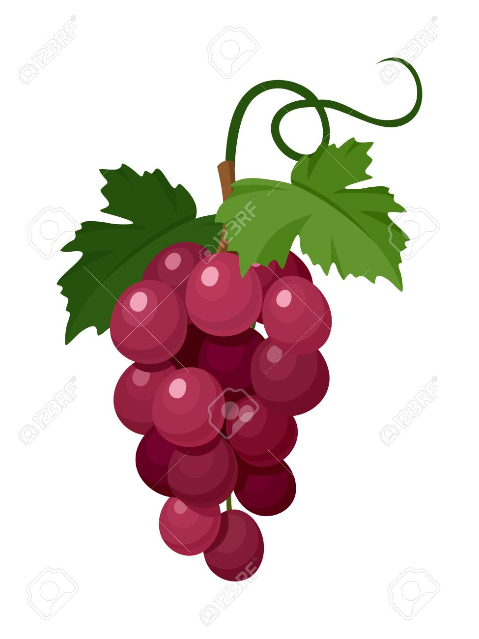 red grapes vector illustration royalty free cliparts vectors and rh 123rf com graph vector functions graph vectors in 3d