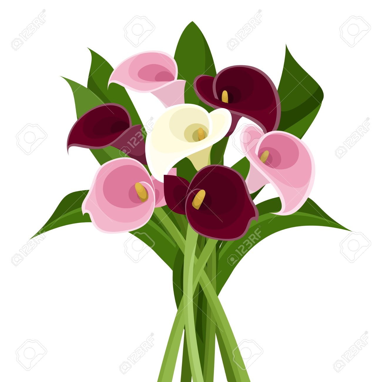 bouquet of colored calla lilies vector illustration royalty free rh 123rf com calla lily border clipart calla lily bouquet clipart