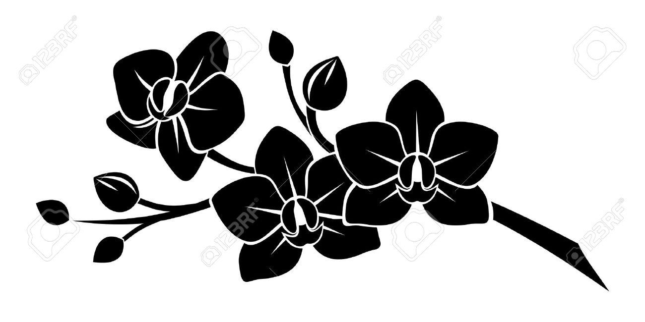 Silhouette Noire De Fleurs D Orchidees Clip Art Libres De Droits