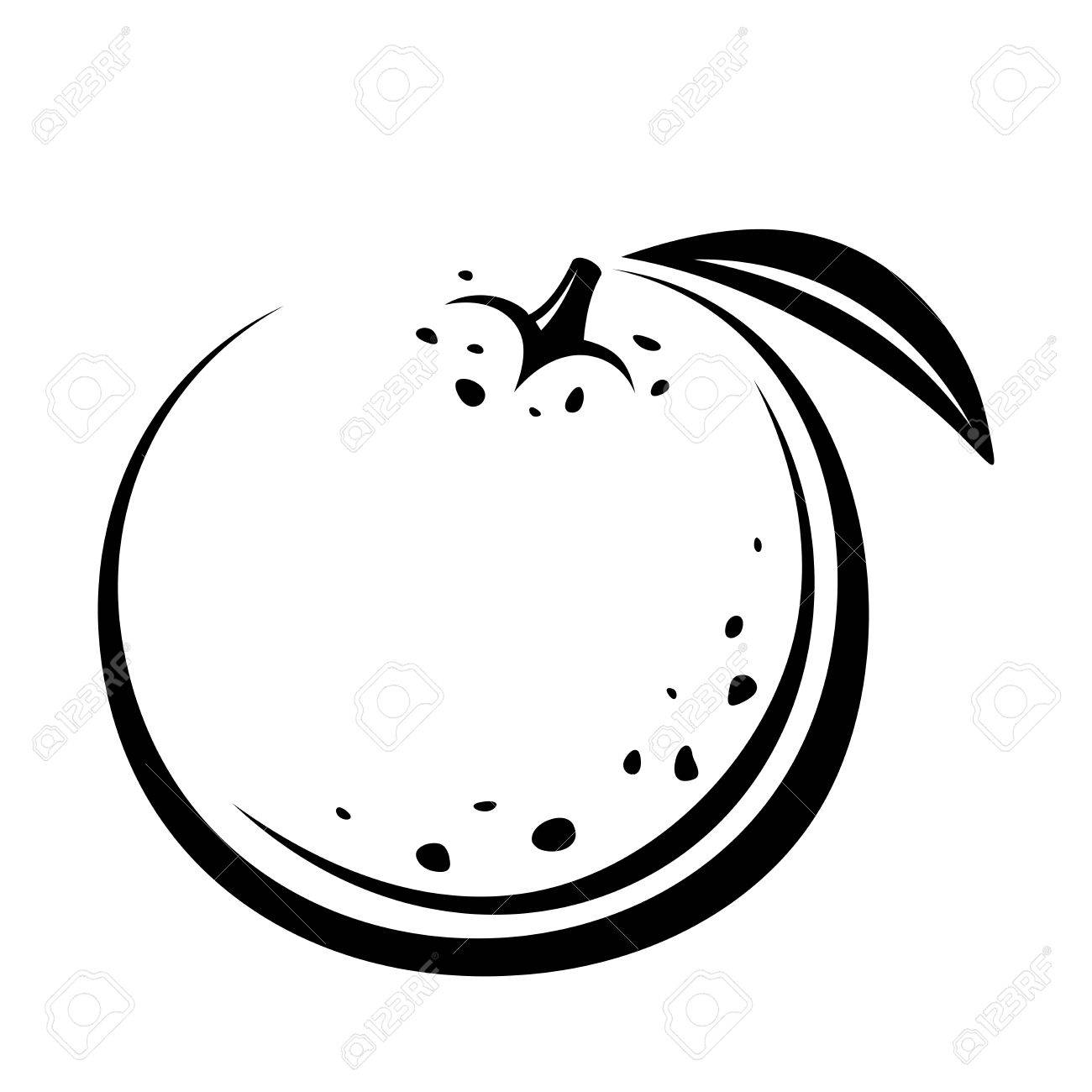 Orange Fruit. Vector Black Contour Drawing. Royalty Free Cliparts ... for Drawing Orange Fruit  29jwn