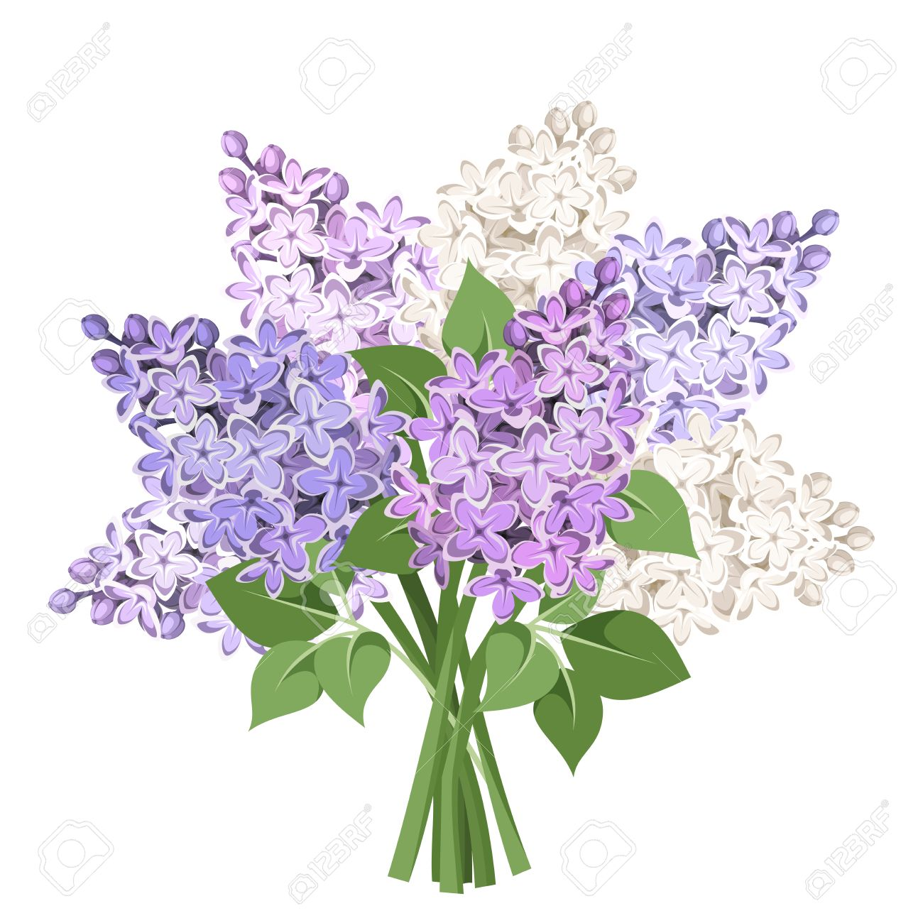 Bouquet Of Purple And White Lilac Flowers. Vector Illustration ...