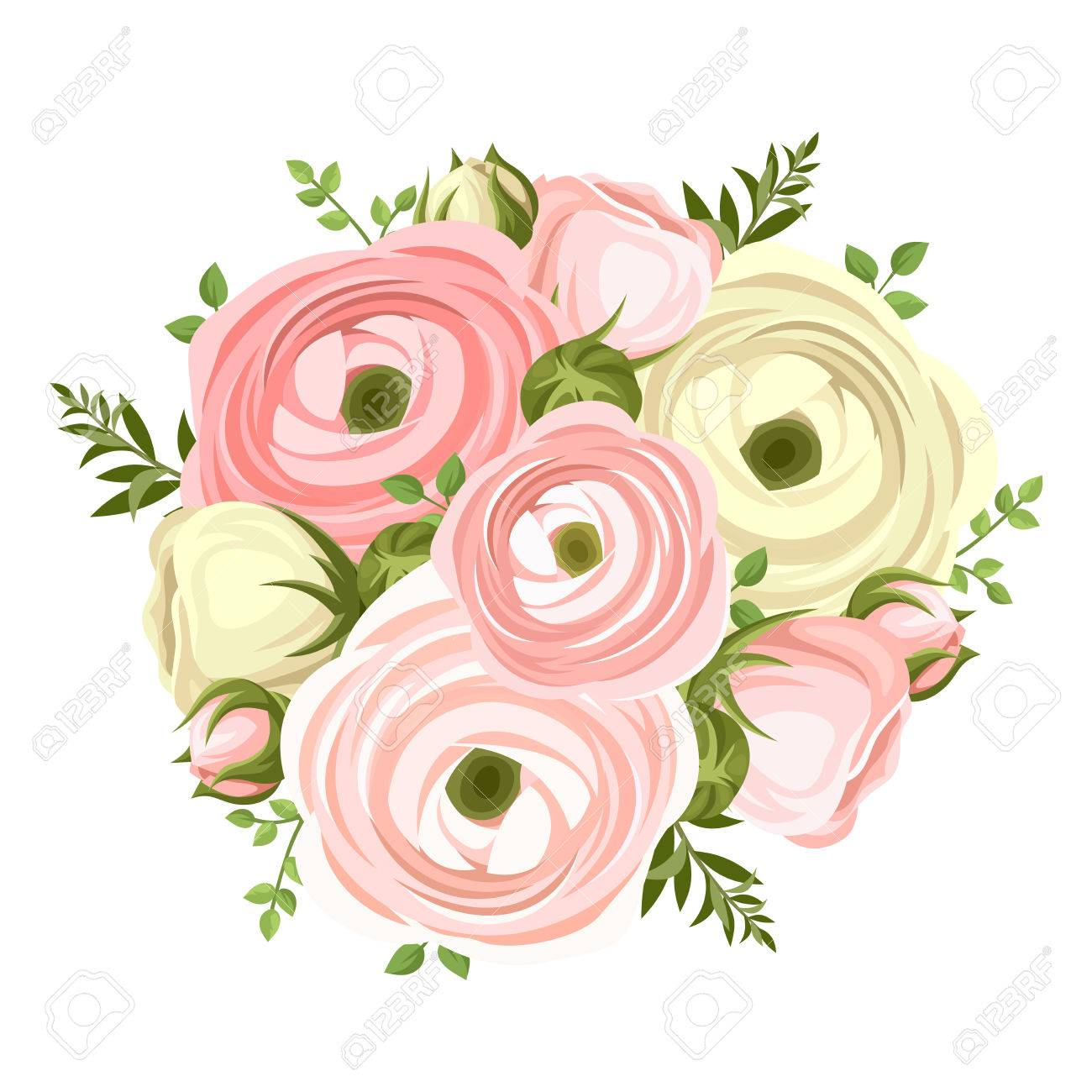 Bouquet Of Pink And White Ranunculus Flowers Vector Illustration
