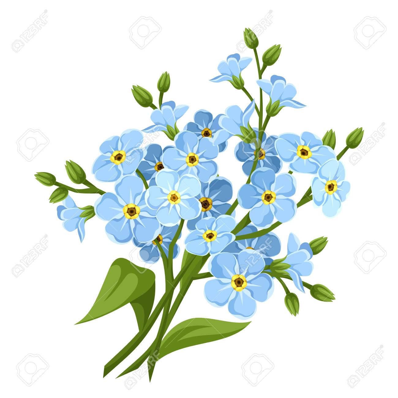 Blue Forget Me Not Flowers Vector Illustration Royalty Free
