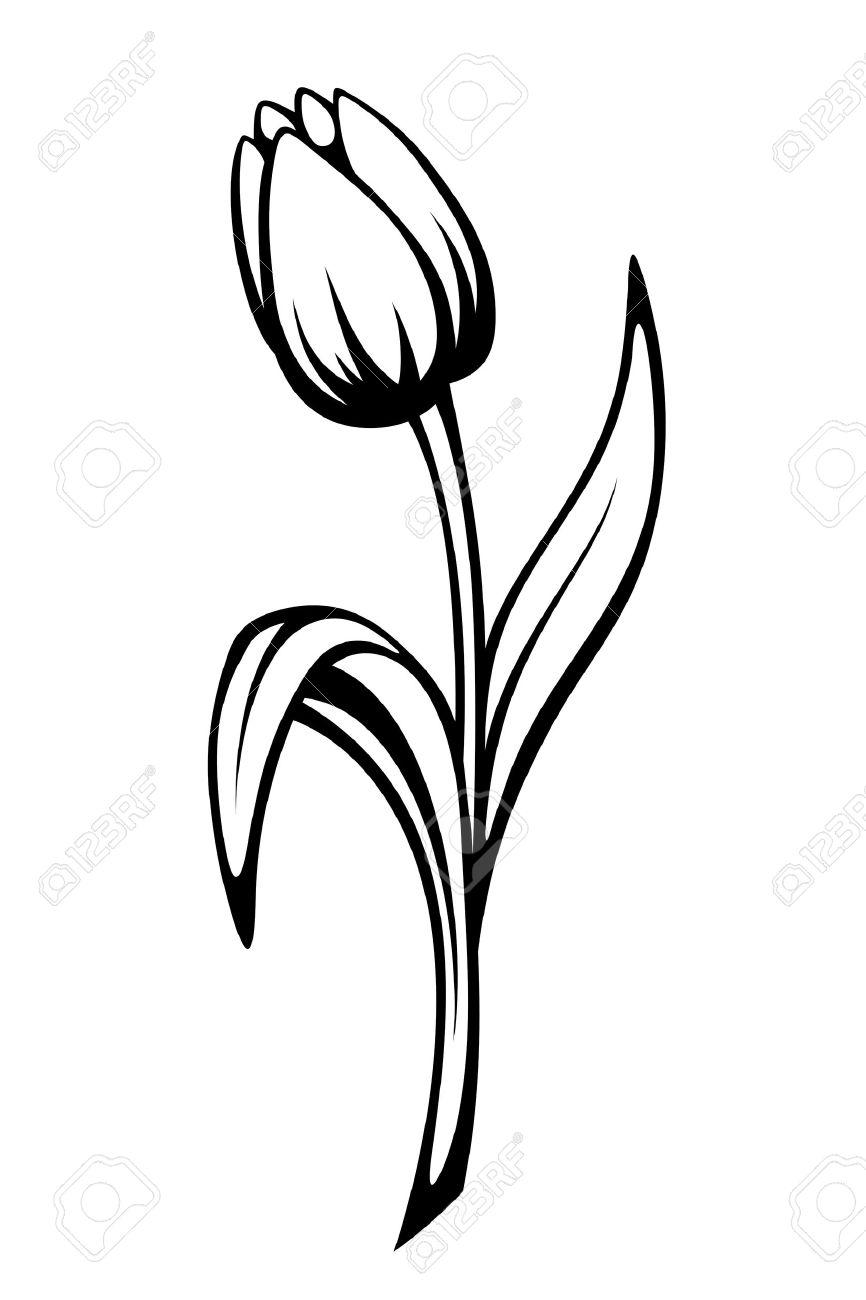 Vector Black Contour Dune Fleur De Tulipe Isolé Sur Un Fond Blanc