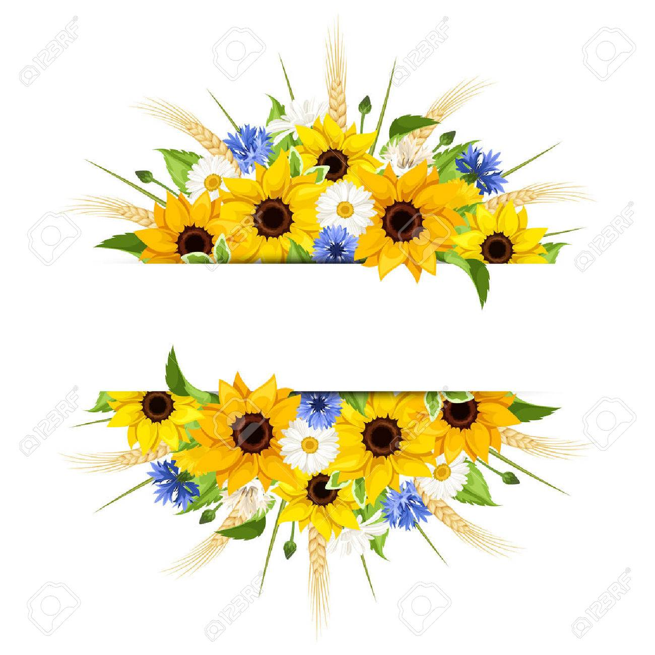 Vector Background Of Sunflowers Daisies Cornflowers Ears Wheat And Leaves Isolated On