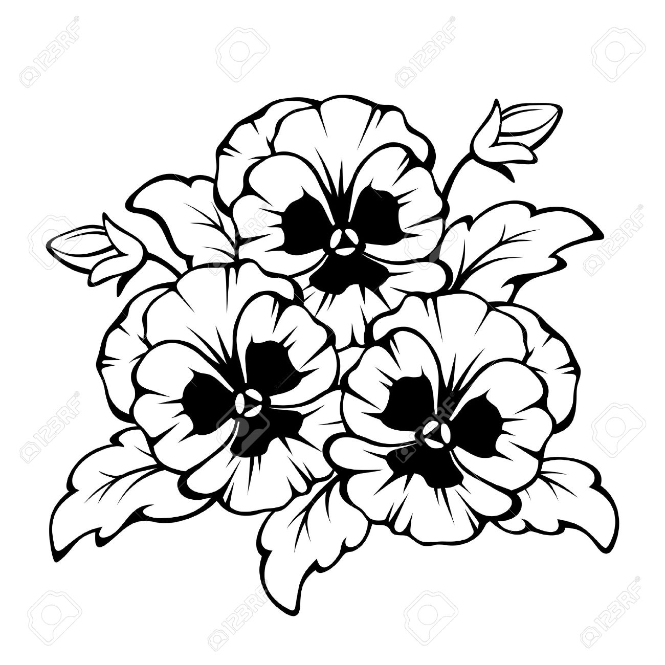 Vector black contour of pansy flowers isolated on a white background. - 62773180