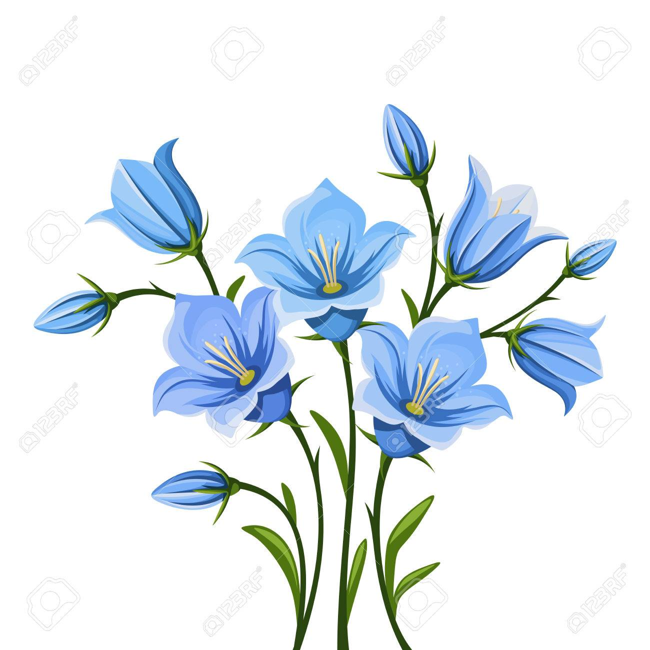 Vector blue bluebell flowers isolated on a white background royalty vector vector blue bluebell flowers isolated on a white background mightylinksfo