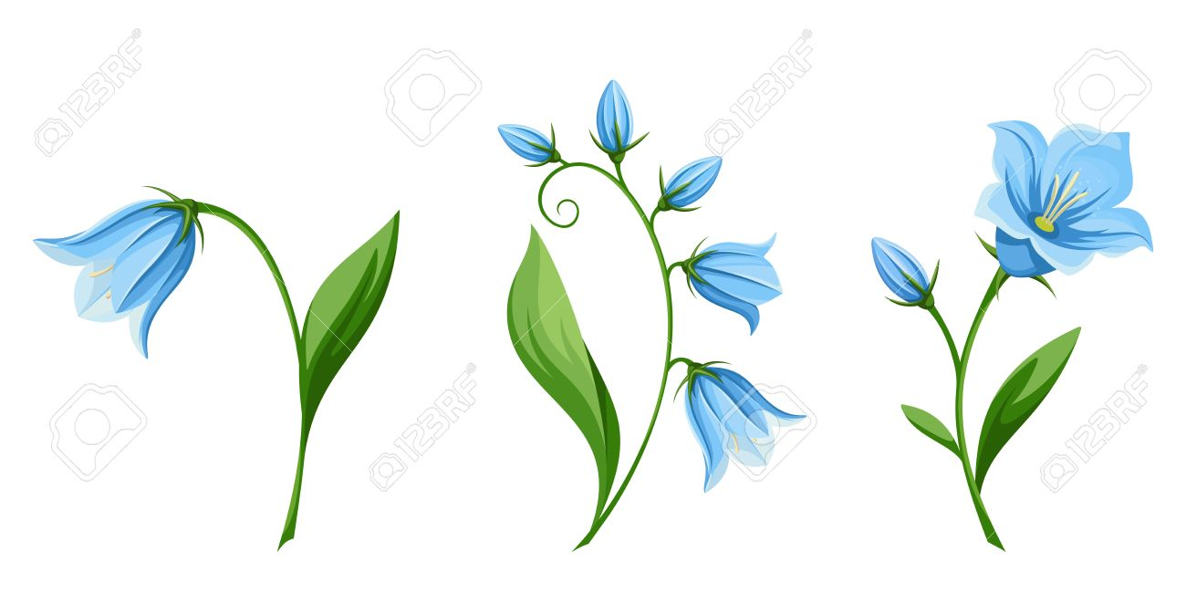 Vector set of blue bluebell flowers isolated on a white background vector vector set of blue bluebell flowers isolated on a white background mightylinksfo