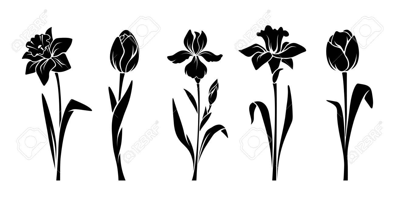 Vector Black Silhouettes Of Spring Flowers Tulips Narcissus