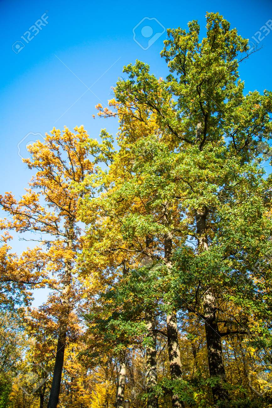 Beautiful Multicolored Trees In The Forest Against Blue Sky On ...