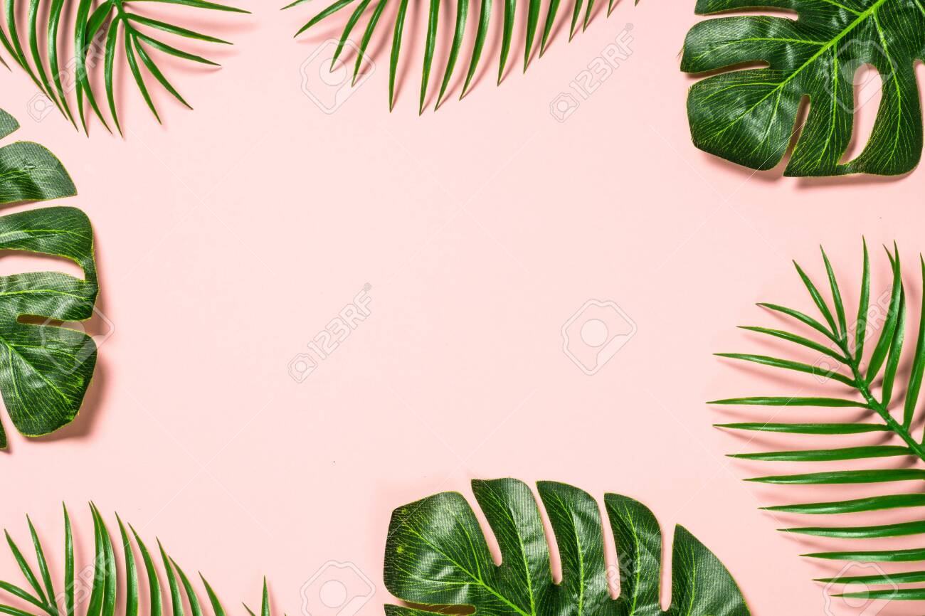 Tropical Leaves On Pink Background Palm Leaves And Monstera Stock Photo Picture And Royalty Free Image Image 124807306 Download all photos and use them even for commercial projects. 123rf com