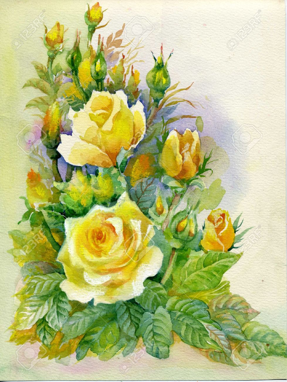 Watercolor Flower Collection Roses Stock Photo Picture And Royalty