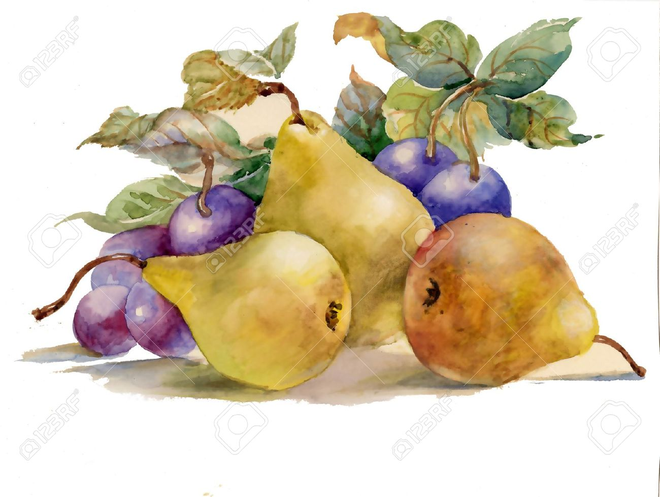 Watercolor Paintings Of Fruit Watercolor painting pears and