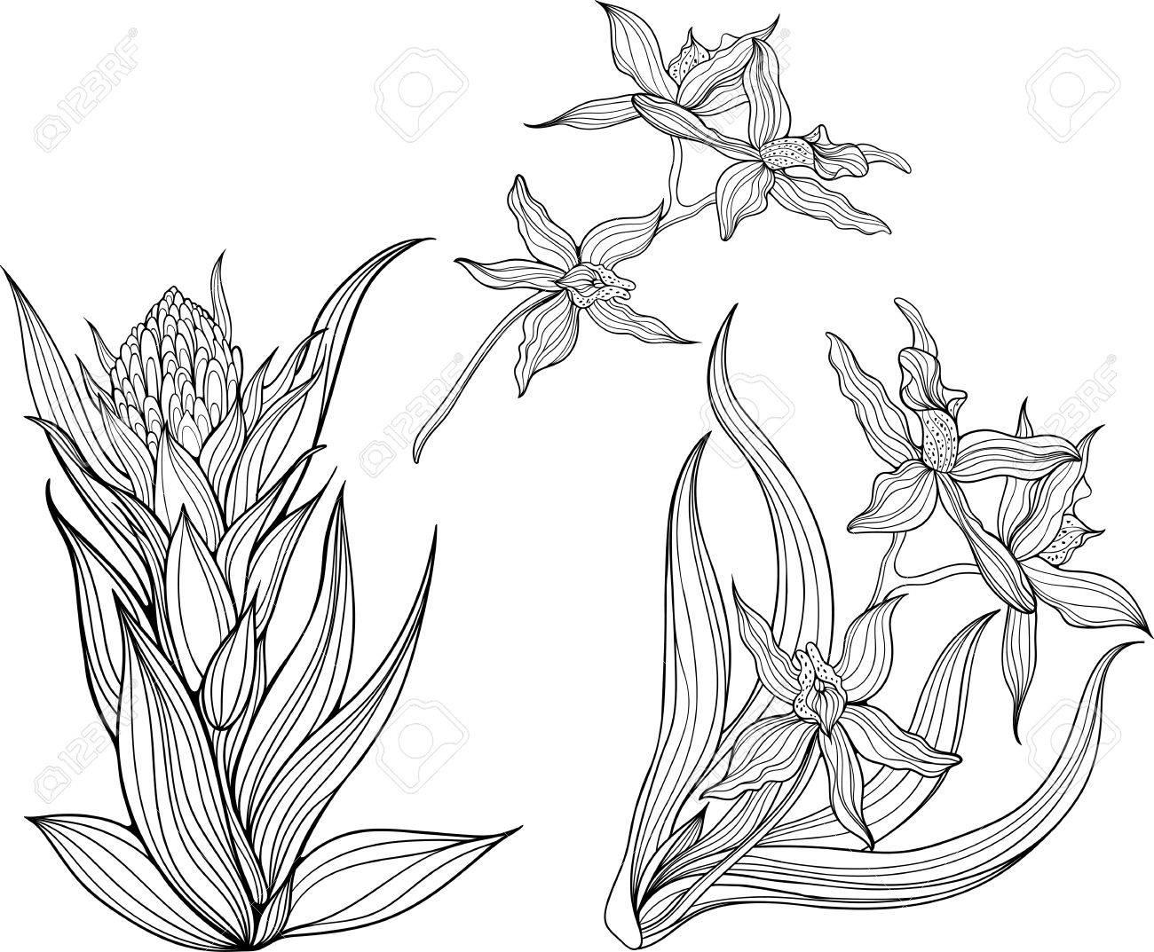 Kleurplaten Natuur Bloemen.Drie Geisoleerde Zwarte En Witte Bloemen Kleurplaat Royalty Vrije
