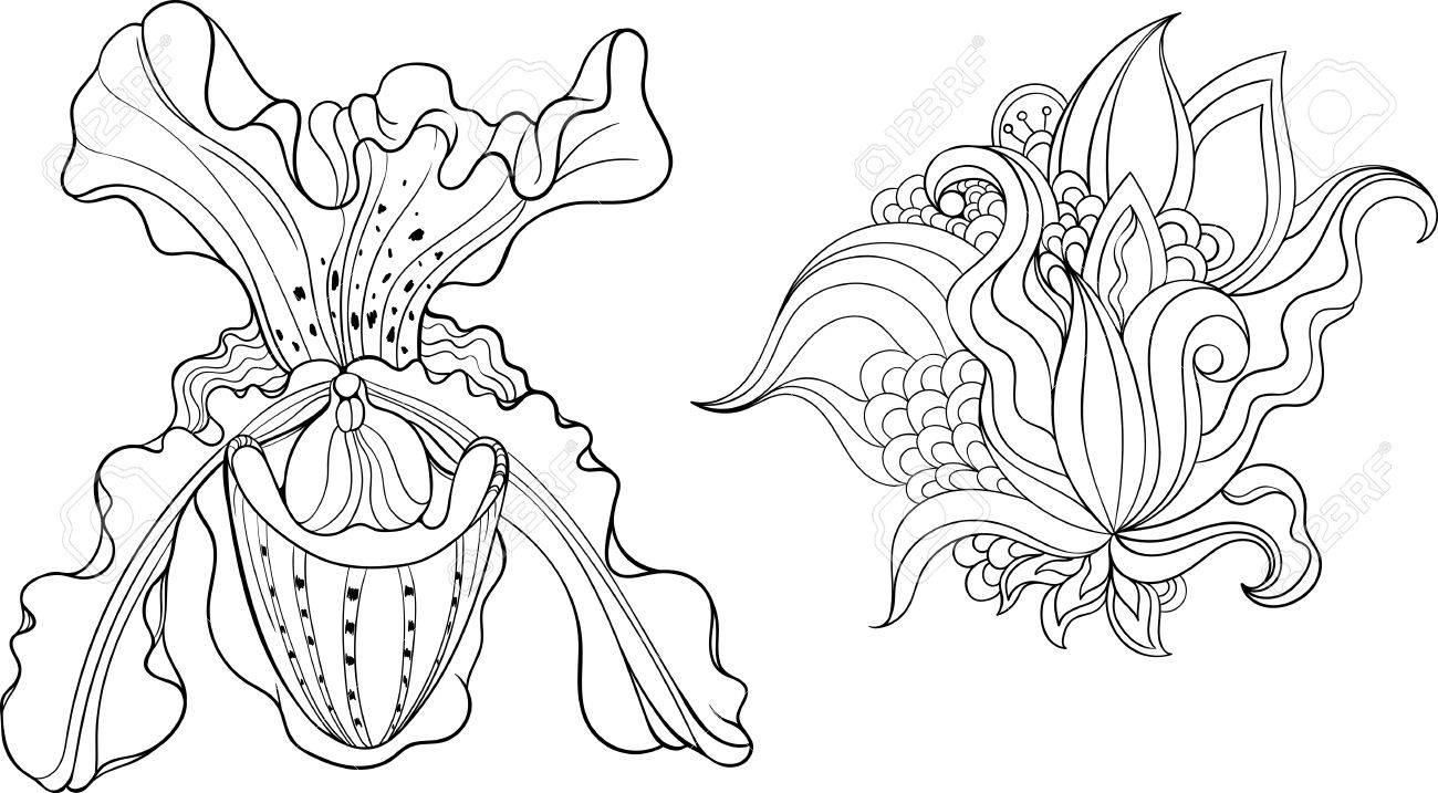 Kleurplaten Natuur Bloemen.Twee Geisoleerde Zwarte En Witte Bloemen Kleurplaat Royalty Vrije