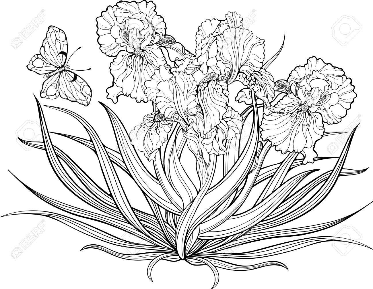 Groß Frühlingsblumen Und Schmetterlinge Malvorlagen Galerie - Entry ...