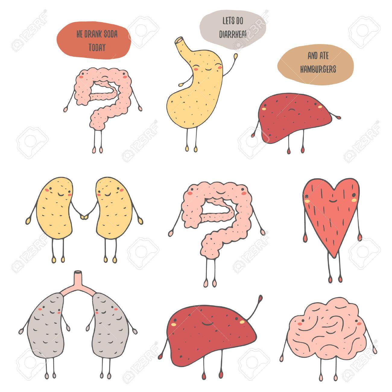Nette Hand Gezeichnete Doodle Innere Menschliche Organe ...