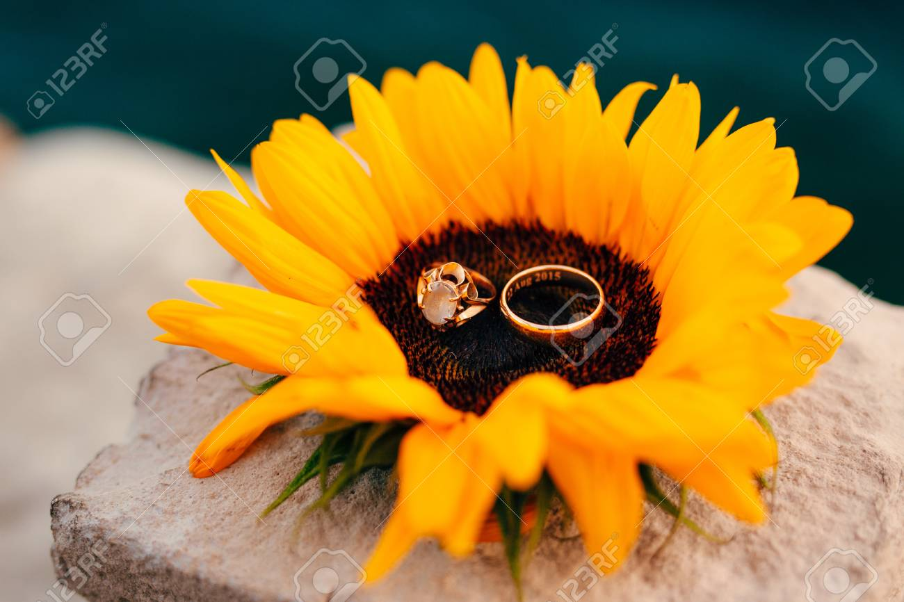 Wedding Rings On A Flower Of A Sunflower. Wedding Jewelry. Stock ... Sunflower Wedding