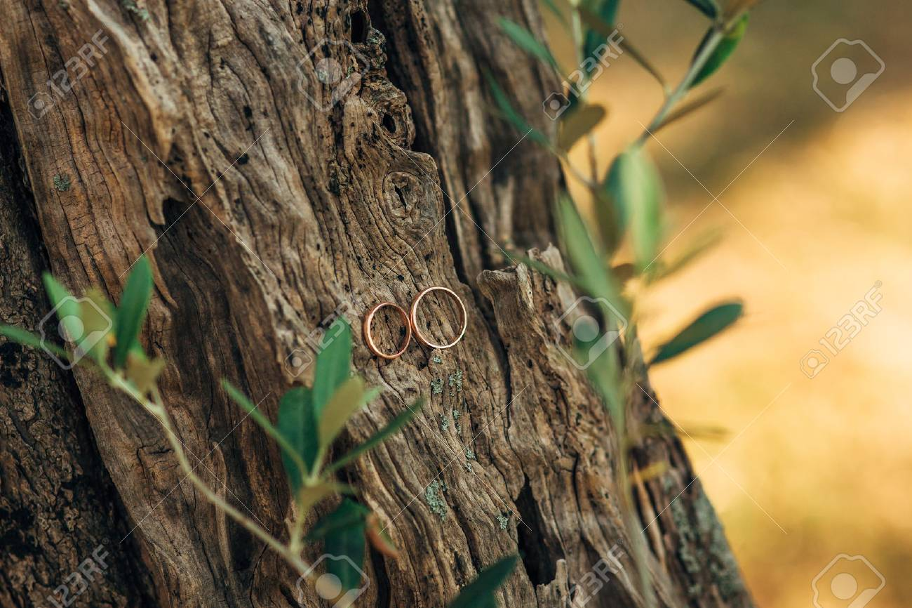 Wedding Rings On A Thread In The Olive Tree Wedding In Montenegro