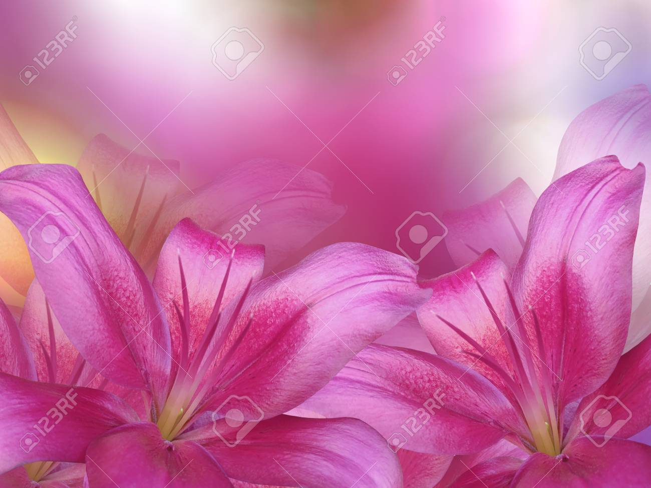 Pink Lilies Flowers On Pink Purple Yellow Blurred Background
