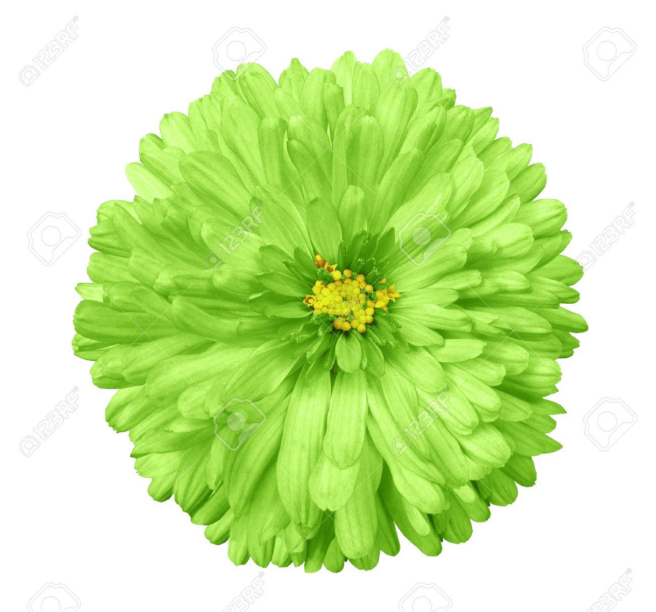 Fleur Verte Fond Blanc Isole Avec Trace D Ecretage Fermer Pas D
