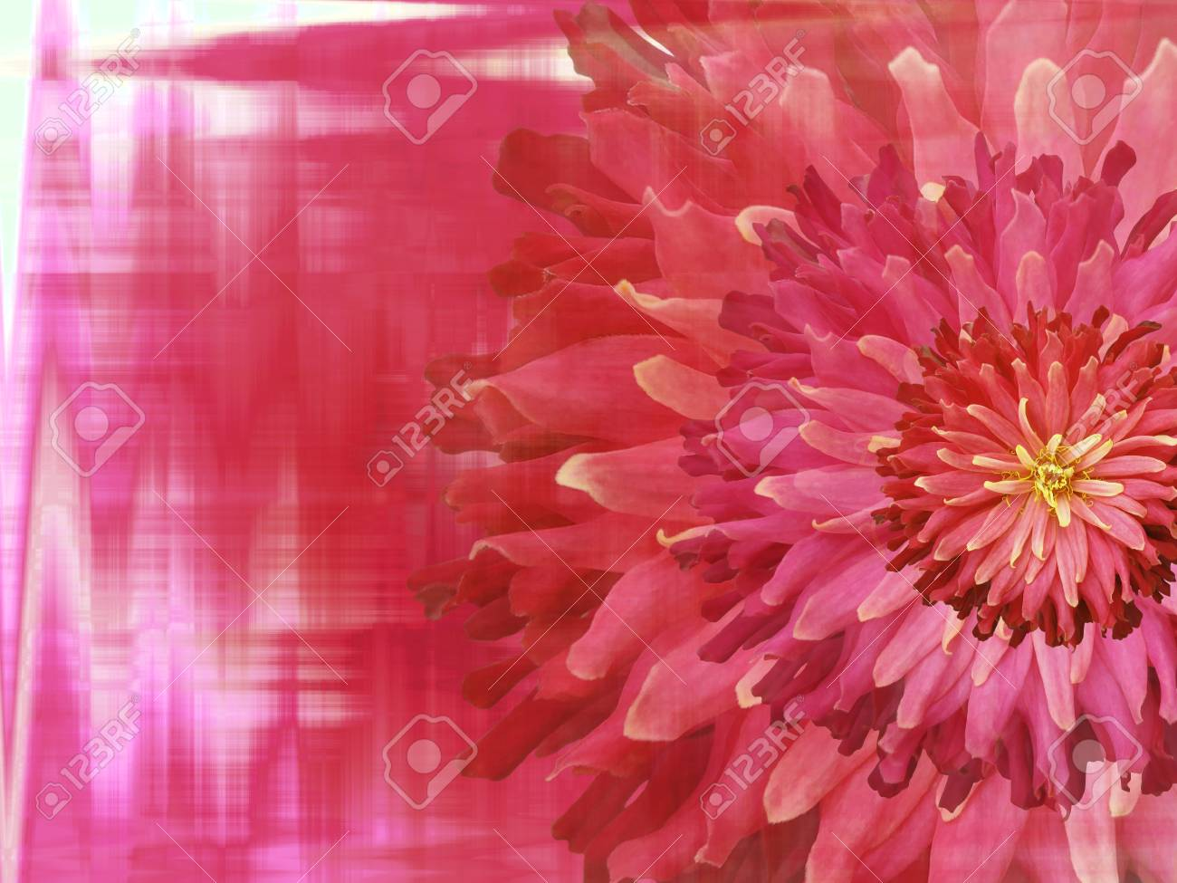 Red Pink Autumn Flowers On Red Pink Blurred Background Stock