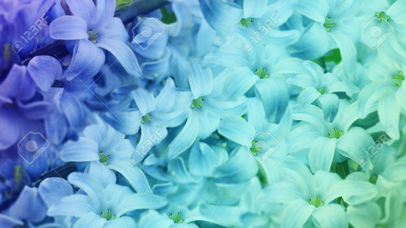 Blue Turquoise Flowers Lilac Floral Background Floral Wallpaper