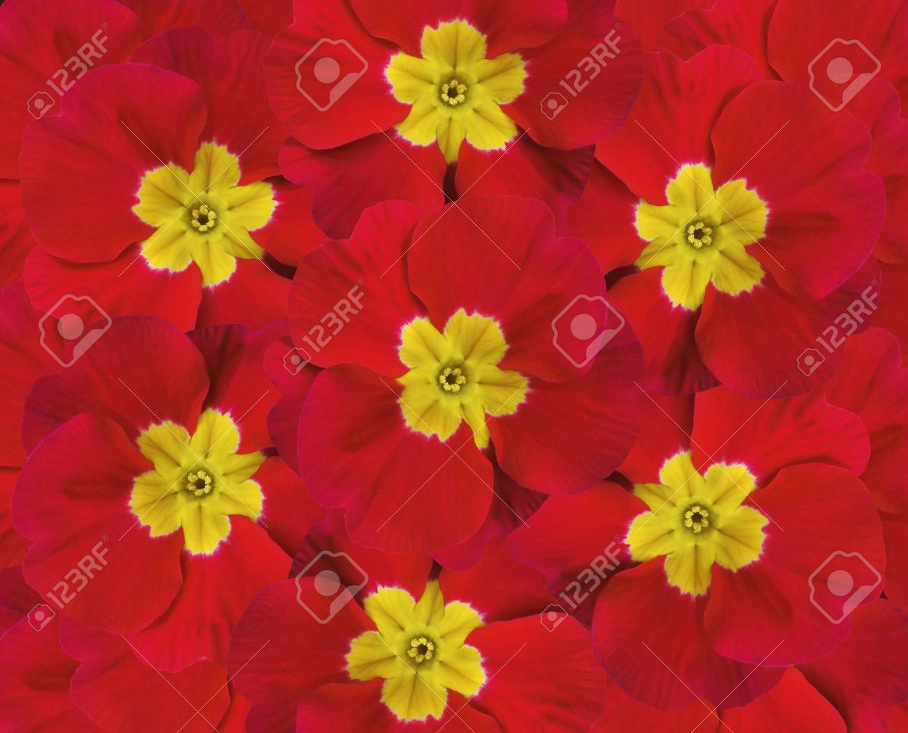 Flowers red violets five violets with a yellow center floral flowers red violets five violets with a yellow center floral collage flower composition mightylinksfo