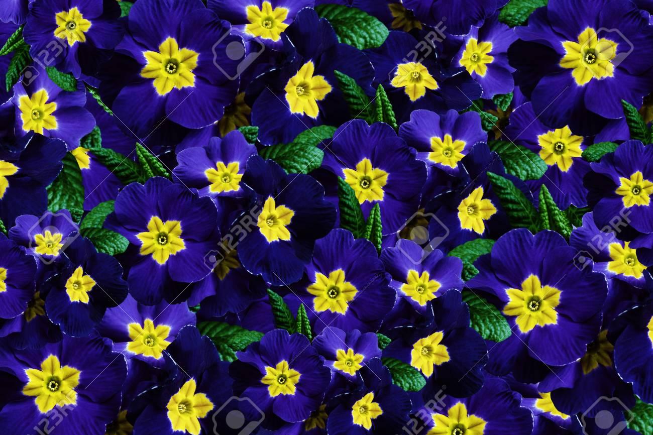 Blumen Blau Gelb