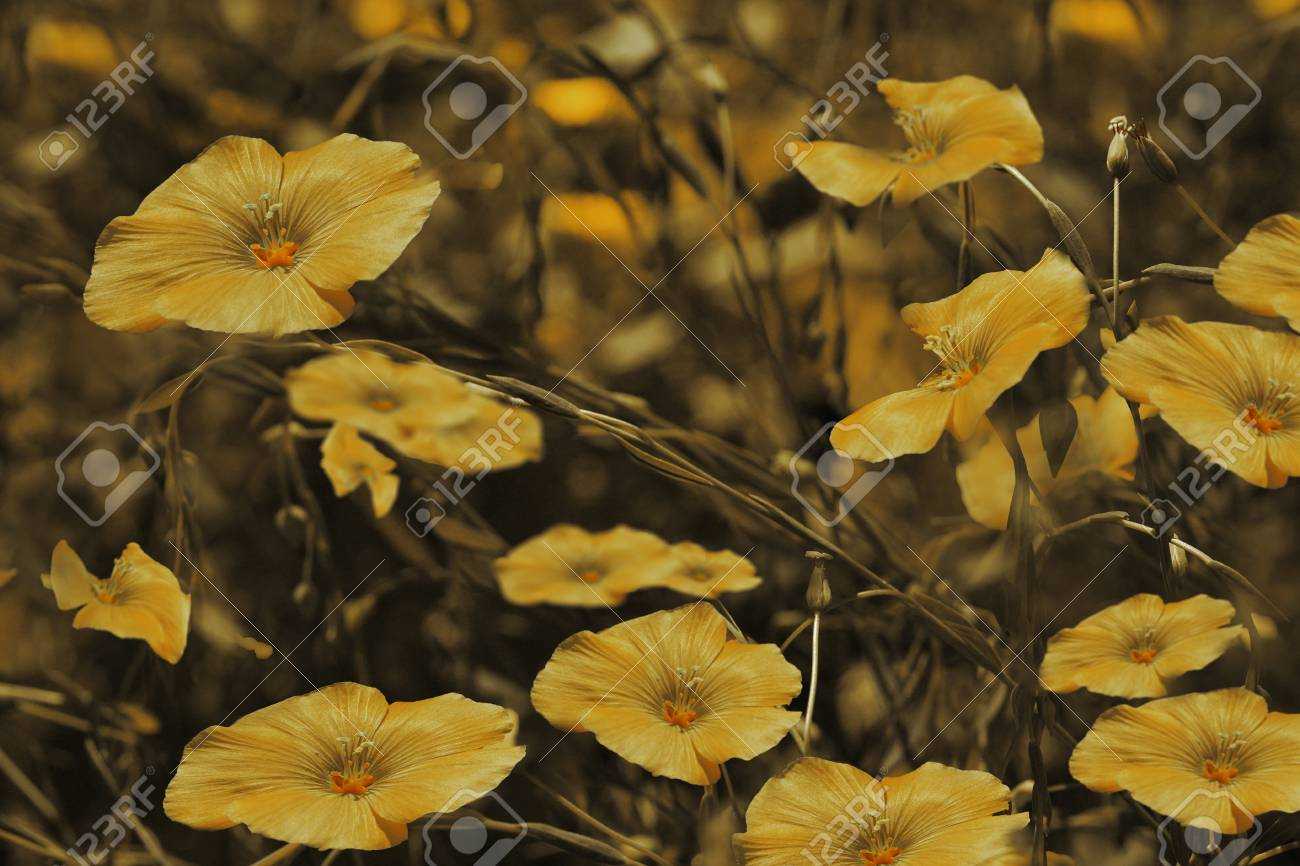 Yellow Flowers On Blurry Brown Background Floral Background