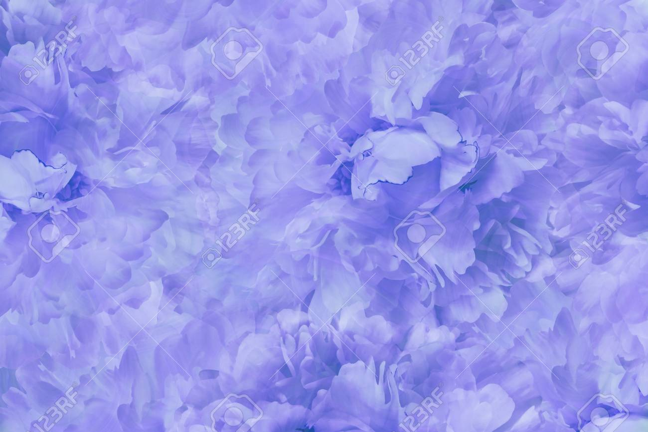 花明るい青の美しい背景 青白牡丹の花の壁紙 花の組成物 クローズ